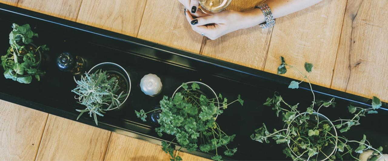 Alimentos para cultivar em casa  | Holmes Place